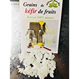 Grains de Kéfir de fruits