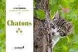Telecharger Livres Calendrier 52 semaines Chatons (PDF,EPUB,MOBI) gratuits en Francaise
