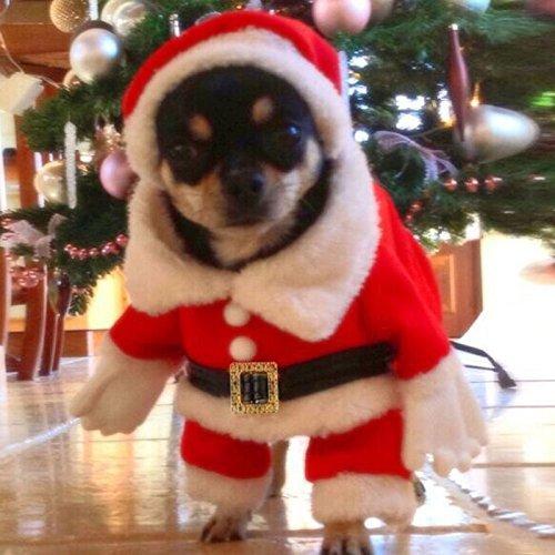 StillCool Hundemantel Hung Winter Jacken Mantel Hundekostüme Weihnachtsengel Flügel Weihnachtsmannkostüm für Hunde (XL)