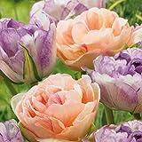 AIMADO sementi giardino - Raro Tulipani Mix Love Cocktail Semi sementi fiori giardino resistenza al freddo Pianta perenne, ideale per Cespuglio/Balconi e terrazze/Bordure/viali