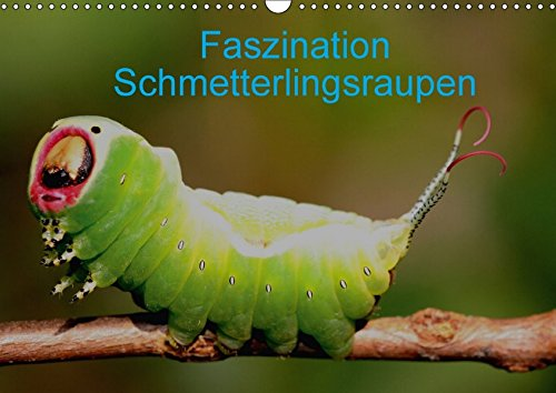 Faszination Schmetterlingsraupen (Wandkalender 2018 DIN A3 quer): In diesem Kalender werden seltene Raupen von Tag- und Nachtfaltern vorgestellt ... [Kalender] [Apr 01, 2017] Erlwein, Winfried