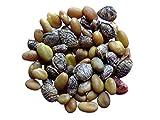 melilot officinal-3grammi-Melilotus officinalis-Yellow melilot-(fertilizzante Verde-sem03
