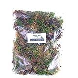 Bonsai-Shopping Sphagnum Moos - Lebend 250 gr. - Grün