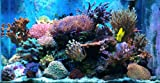 Roche ALVEO pour aquarium recifal (eau de mer)