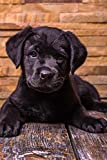 Darling Little Black Labrador Retriever Puppy Journal