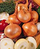 Risitar Graines - Oignon Centurion F1 Bio Productive 20/50pcs, Graines de légumes jardin plante vivace résistante au froid