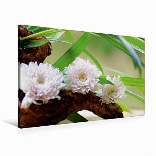 Calvendo Premium Textil-Leinwand 90 cm x 60 cm quer zarten Blüten | Wandbild, Bild auf Keilrahmen, Fertigbild auf echter Leinwand, Leinwanddruck Gesundheit Gesundheit