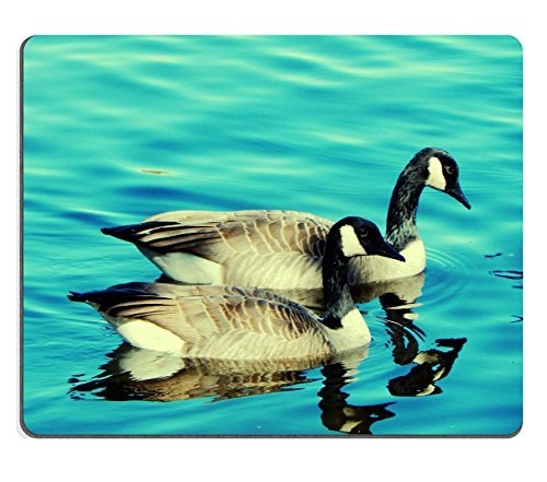 oche-canada-goose-lake-blue-bird-wildlife-qzone-customized-made-to-order-cloth-with-neoprene-rubber-