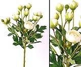 Ranunkel Blumenstrauss, mit 10 Blüten, creme farbig, Höhe 55cm - Kunsblumen künstliche Blumen Kunstpflanzen künstliche Pflanzen Blumen