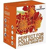 perfekt für Pollinators Samen Wachstums Set Geschenkbox von Thompson & Morgan – 5 Biene freundlich blühende Blumen to Grow ; Verbena bonariensis, Foxglove, Calendula, Kornblume & Ringelblume Samen