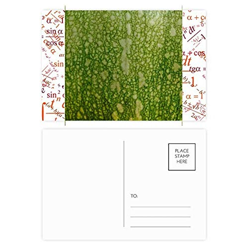 DIYthinker Green Pumpkin Peel Macro Photo Patterns Formula Postcard Set Thanks Card Mailing Side 20Pcs 5.7 inch x 3.8 inch Multicolor