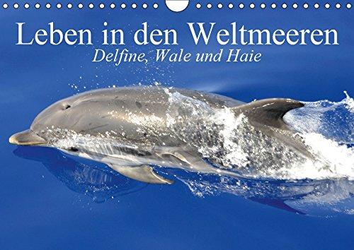 Leben in den Weltmeeren. Delfine, Wale und Haie (Wandkalender 2019 DIN A4 quer): Gleiten und Leben in den Ozeanen der Welt (Monatskalender, 14 Seiten ) (CALVENDO Tiere)