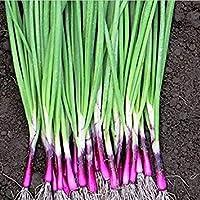 Vista Four Seasons Red petites graines d'échalote, graines de légumes délicieux - 50pcs / lot