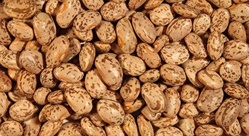 HATCHMATIC GRAINES DE Squash, courgette COCOZELLE, Heirloom, Bio, 100 graines, Non OGM