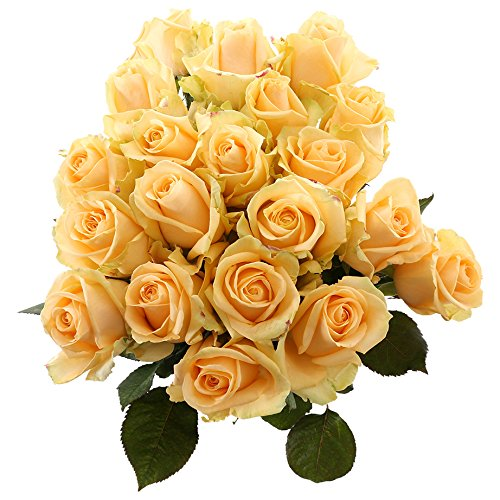 Choice of Green - 1 bouquet Roos Avalanche Medium de pêche - 20 tiges - Hauteur ? 60 cm - Qualité
