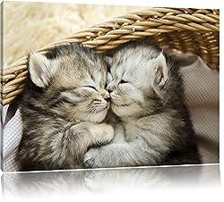Baby Katze, Bild auf Leinwand, XXL riesige Bilder fertig gerahmt mit Keilrahmen, Kunstdruck auf Wandbild mit Rahmen, günstiger als Gemälde oder Ölbild, kein Poster oder Plakat, Format:100x70 cm