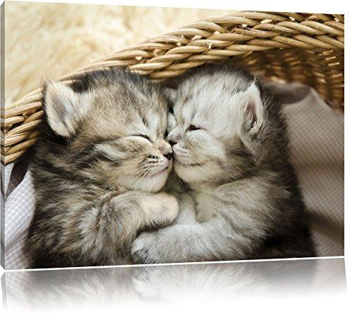 Baby Katze, Bild auf Leinwand, XXL riesige Bilder fertig gerahmt mit Keilrahmen, Kunstdruck auf Wandbild mit Rahmen, günstiger als Gemälde oder Ölbild, kein Poster oder Plakat, Format:60x40 cm (Katze Bilder)