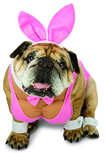 Rasta Imposta Hunny Bunny Hund Kostüm, XS