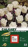Ernest TURC Pack de 12 Bulbes Tulipe Calgary Calibre Ivoire 13,5 x 7 x 23 cm 930710