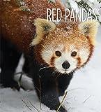 Red Pandas (Living Wild)