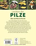 Lexikon der Pilze: Bestimmung, Verwendung, typische Doppelgänger – Über 210 Pilze im Porträt - 2
