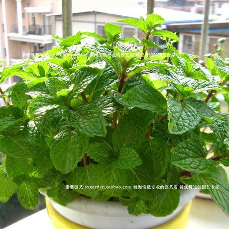 050601-vasi-di-semi-di-fiori-fioriere-giardino-sementes-di-alberi-da-frutto-bonsai-lampadine-casa-ve