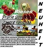 40x Pradera Cogotera (enano ratibida) Semillas Centro de atención Planta Flores nuevo Variedad 2016 #20