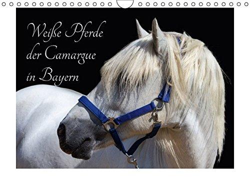 margue in Bayern (Wandkalender 2018 DIN A4 quer): Das Camargue-Pferd ist eine der schönsten Pferderassen weltweit. (Monatskalender, ... [Apr 01, 2017] brigitte jaritz, photography ()