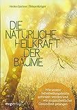 Die natürliche Heilkraft der Bäume: Wie unsere Selbstheilungskräfte gefördert werden und wir zu ganzheitlicher Gesundheit gelangen