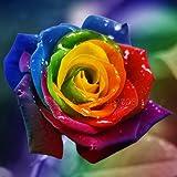 50 Samen seltene Regenbogen-Rose Samen, für Ihre Geliebte Regenbogen-Rosen-Blumensamen