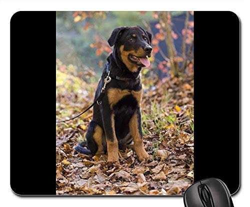 Gaming-Mauspads, Mauspad, Rottweiler Hund Haustier Tier Hundeportrait Schnauze 2 2 Tier-server