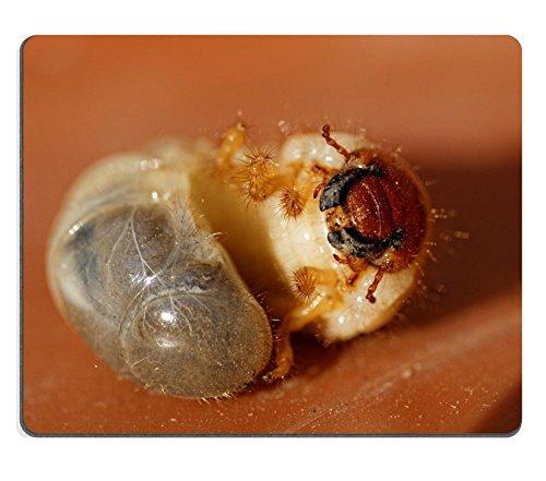 msd-natural-rubber-gaming-mousepad-image-id-29371192-foto-di-un-piccolo-puo-beetle-larve-melolontha-