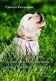 Eddy zieht ein – von den Abenteuern eines Golden Retriever - Ein neues Leben mit Hund