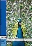 Landre 390302005 Zeichenblock DIN A3, 100 g/qm, 20 Blatt