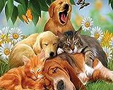 Carino cani e gatti 5D pittura diamante strass kit ricamo a punto croce Craft DIY Art Home Wall Decor (30x 25cm)