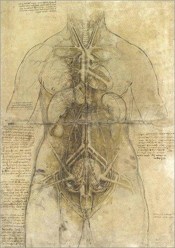 Posterlounge Bild Anatomische Studie – Leonardo da Vinci