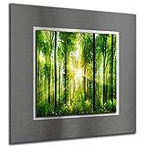 bilder-paradies Wandbild Wandbilder auf Alu-Dibond Bild Bilder Wohnraumaccessoires Wohnraumdekoration Wald Natur Sonne 8099-1Ba