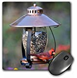 Northern Cardinal on copper lantern hopper bird feeder, Marion Co. IL - Mouse Pad, 8 by 8 inches (mp_208643_1)