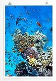 Eau Zone Home Bild - Naturbilder – Tropisches Korallenriff mit Orangen Fischen- Poster Fotodruck in höchster Qualität