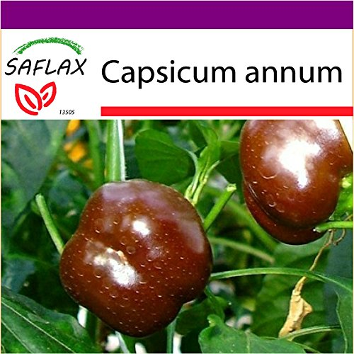 SAFLAX - Big Garden - Paprika - Sweet Chocolate x - 10 Samen - Capsicum annum