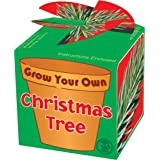 Grow Your Own Christmas Tree -- All contents included get growing