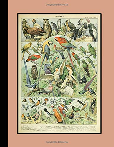 Vintage Botanical Illustration Journal: Oiseaux - The Large Botanical Journal for the Bird Lover and Enthusiast