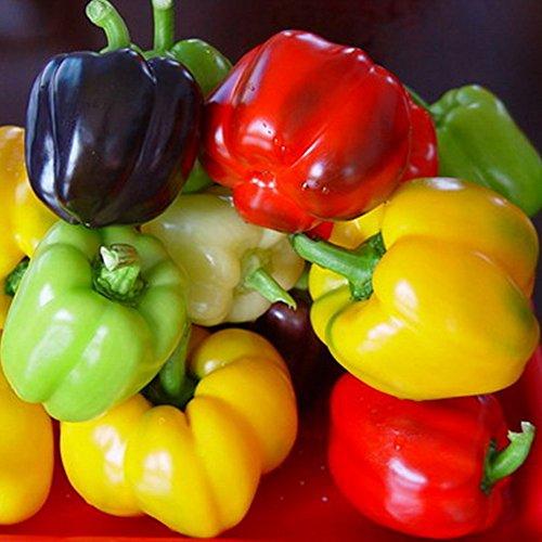 240 Pfeffersamen Gemüsesamen Süße Pickle Pfeffersamen im Garten