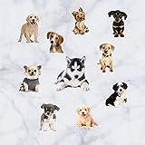 Pegatina pared vinilo decorativo zocalos pared escaparates razas perros clinicas veterinarias residencias caninas de CHIPYHOME