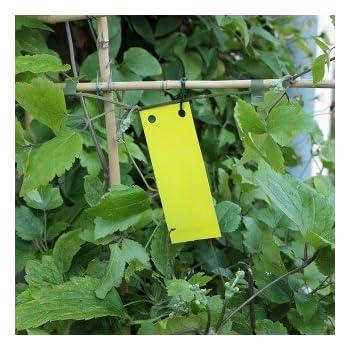 Gelbtafeln - Gelbsticker 20 Stück/5x12 cm - Leimtafeln