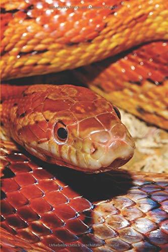 Schlange Notizbuch: Tagebuch / Notizbuch für Schlangen Fans