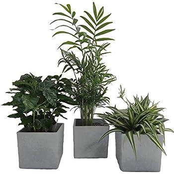 Zimmerpflanzen gr npflanzen mix nach ihren w nschen 3er mix garten - Rankpflanzen zimmer ...