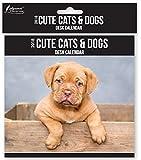 Calendrier de bureau 2018 rabattable avec affichage mensuel pouvant servir à la maison, au bureau ou sur une table d'un étudiant (chats/chiens/chiots/chatons mignons)