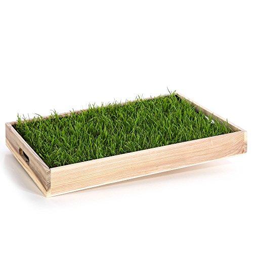 Miau Katzengras inklusive Dekotablett 'Pure Nature' | 60x40cm echtes, saftiges Gras | sofort nutzbar - kein aussäen | (Pure Nature)