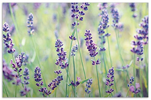 Wallario Herdabdeckplatte/Spritzschutz aus Glas, 2-teilig, 80x52cm, für Ceran- und Induktionsherde, Motiv Lila Blumenfreude - Violette Pflanzen auf der Wiese -